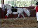 Secret Ravine Lipizzans Demonstration